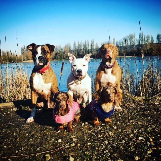 dog walkers in snodland, dogs sitting by the forest lake